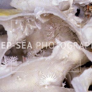 bryozoan habitat