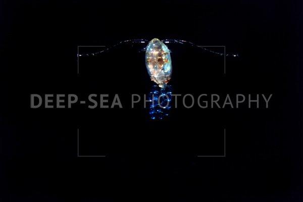 deep-sea copepods